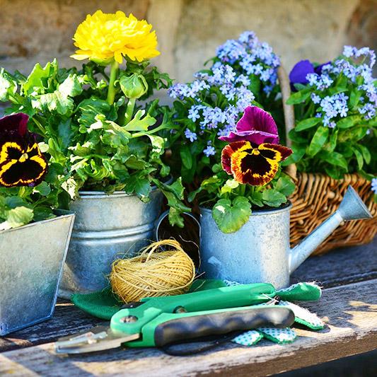 Pflanz dich glücklich Blüher