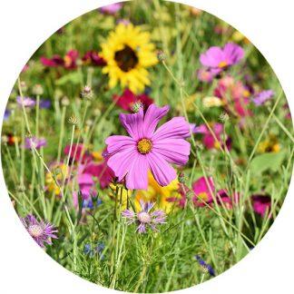 Blumewiese Datteln