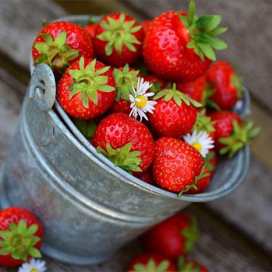 Pflanz dich glücklich Früchte