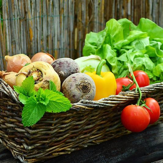 Pflanz dich glücklich Gemüsepflanzen