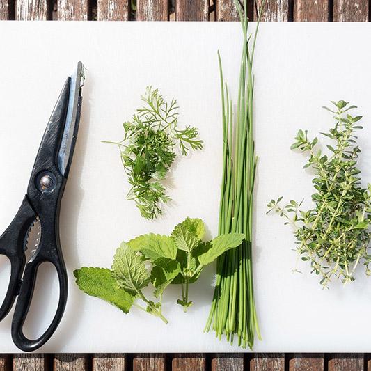Pflanz dich glücklich Küchenkräuter